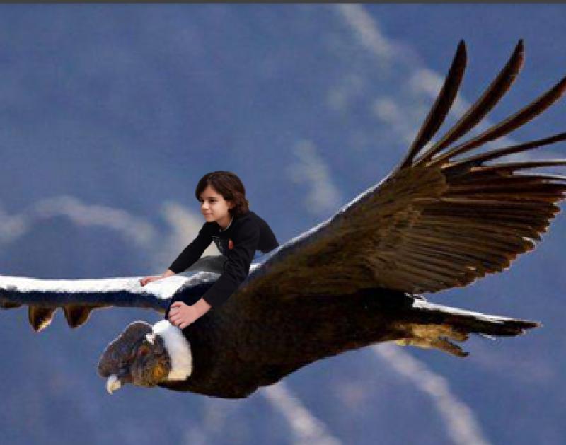 condor peruano