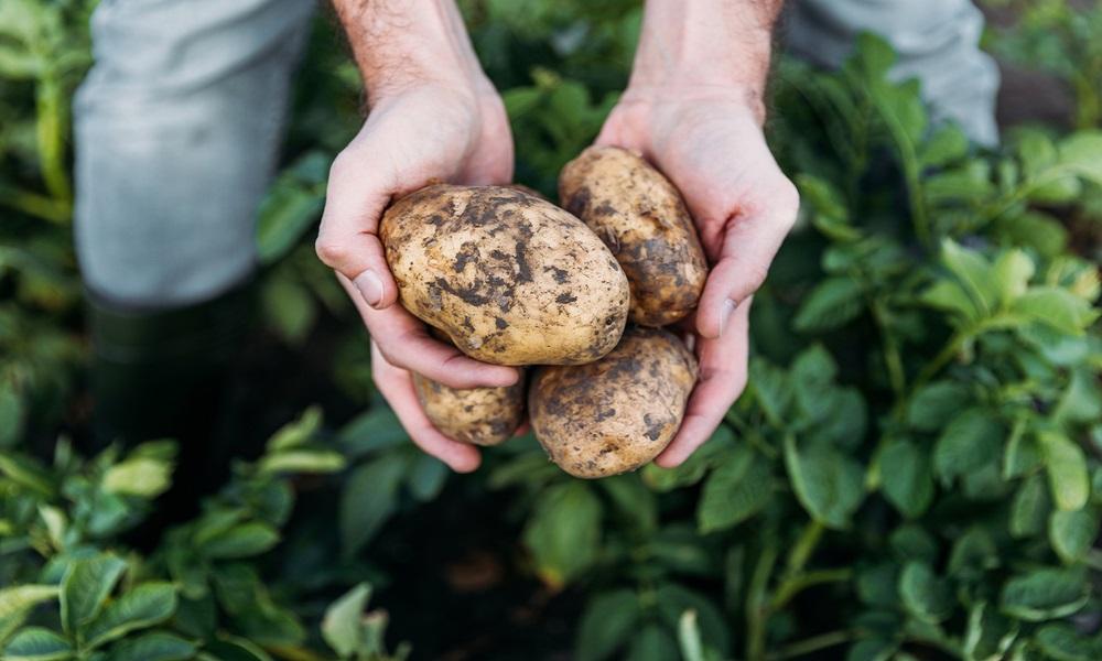 potatoeday